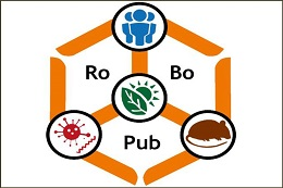 Verbesserung der Öffentlichen Gesundheit durch ein besseres Verständnis der Epidemiologie nagetierübertragener Krankheiten (RoBoPub)